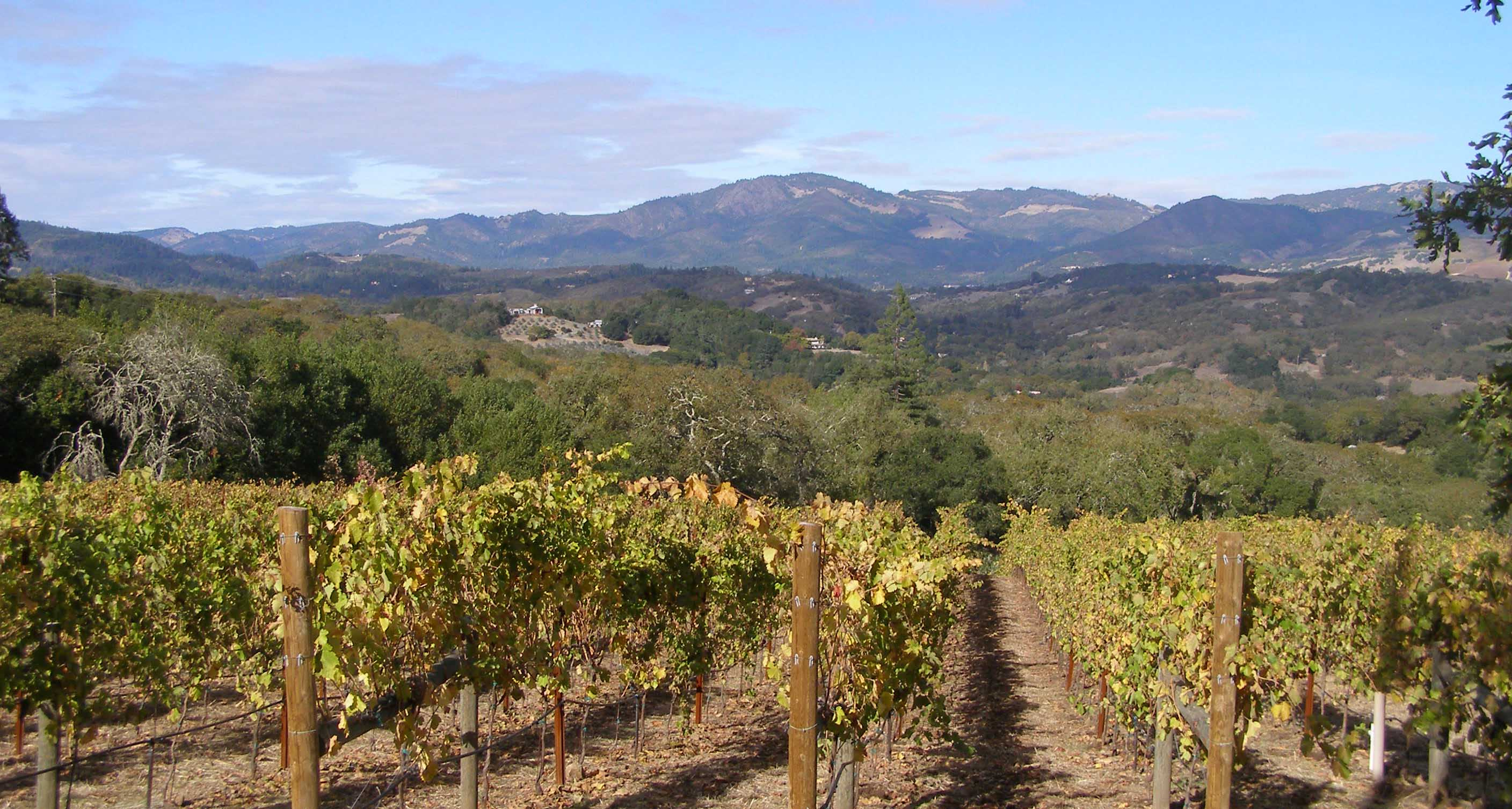Vineyards in the Sonoma Hills, Overlooking the Mayacamas. Napa is in the distance, on the other side.